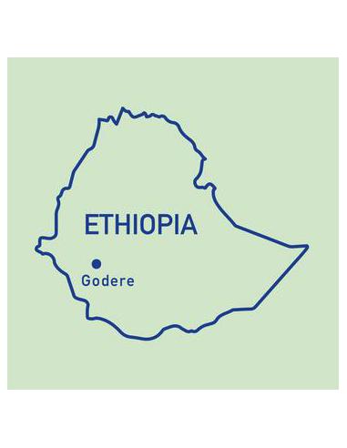 محمصة كويارد للقهوة - قهوة بونغا الأثيوبية بوزن 250 جرام